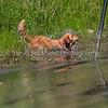 grca_puppy2012_1019