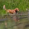 grca_puppy2012_1018
