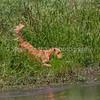 grca_puppy2012_1015