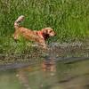 grca_puppy2012_1017