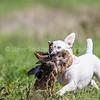 grca_puppy2012_0747