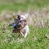 grca_puppy2012_0742