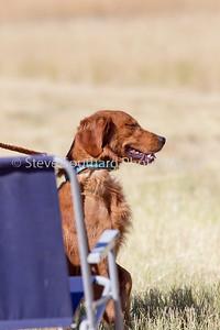 GRCA 2010 Puppy #01 LaCrosse KC The Rifleman