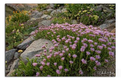 O'Grady, Claudia - Wildflowers-2