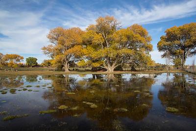 Whitesides_Mary_A Tree Loving Pond