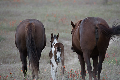 barry_hall_horses_butts