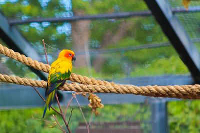 barbara_holdcroft-Parrot
