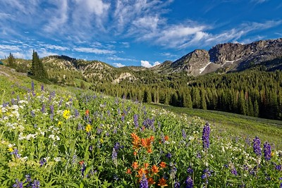 July Albion Basin Field Trip