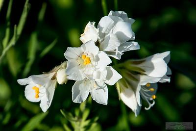 Lloyd_Blackburn-Wild Flowers-10