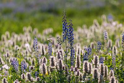 Don_Trowbridge-Wildflowers4