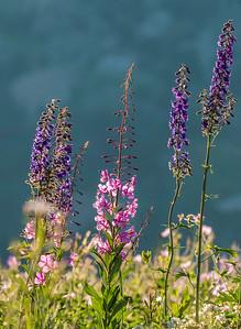 Don_Trowbridge-Wildflowers3