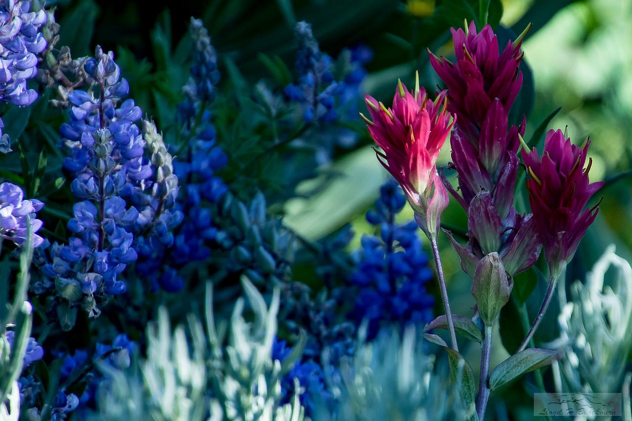 Lloyd_Blackburn-Wild Flowers-8