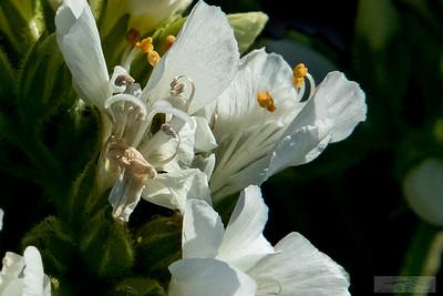 Lloyd_Blackburn-Wild Flowers-11