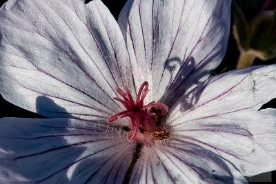 Lloyd_Blackburn-Wild Flowers-13