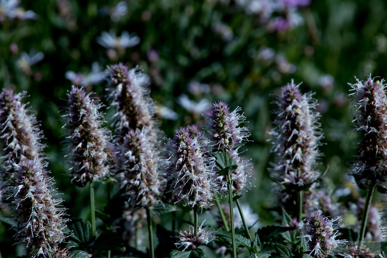 Lloyd_Blackburn-Wild Flowers-1