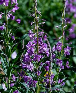 Lloyd_Blackburn-Wild Flowers-2