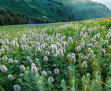 Don_Trowbridge-Wildflowers1
