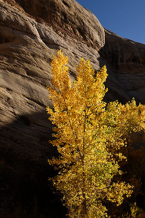 October Capitol Reef