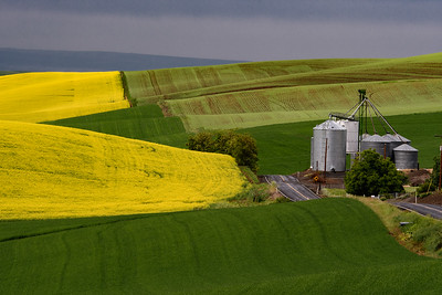 Palouse - May 2018