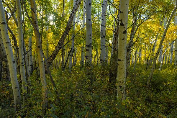 Rick_Cohen-Thru_the_trees