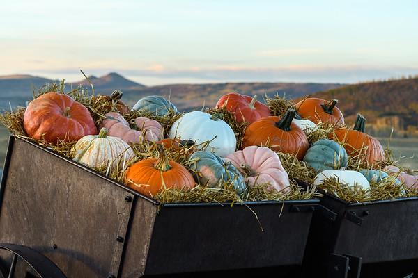 Rick_Cohen-Pumpkin_cart