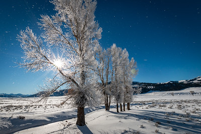 Jason_Hutchison-Frosty_Trees
