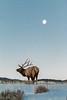 Jason_Hutchison-Bugle_at_the_Moon