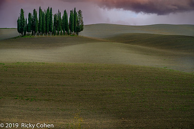 Val d'Orcia Cypress Trees