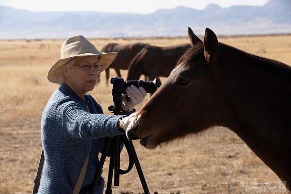 L_Blackburn_Wild Horses-35