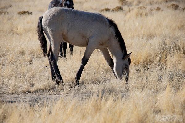 L_Blackburn_Wild Horses-7