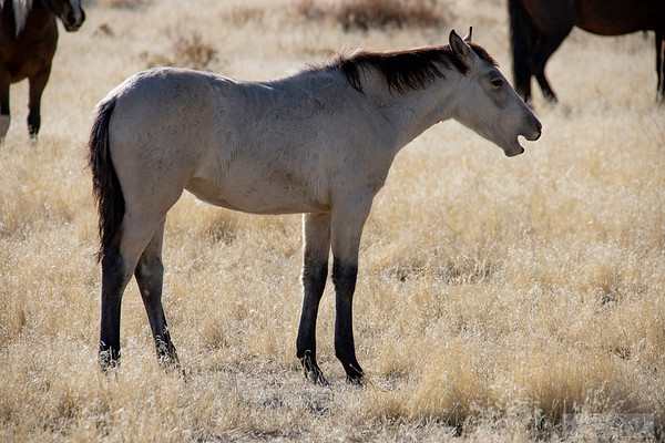 L_Blackburn_Wild Horses-10