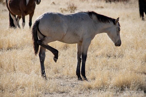 L_Blackburn_Wild Horses-11