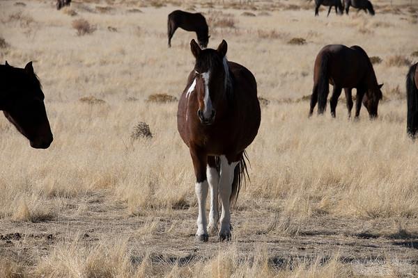 L_Blackburn_Wild Horses-17