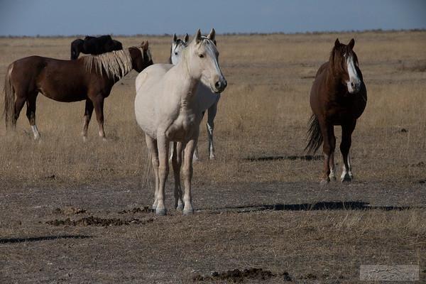L_Blackburn_Wild Horses-28