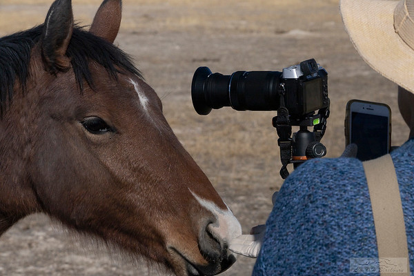 L_Blackburn_Wild Horses-36