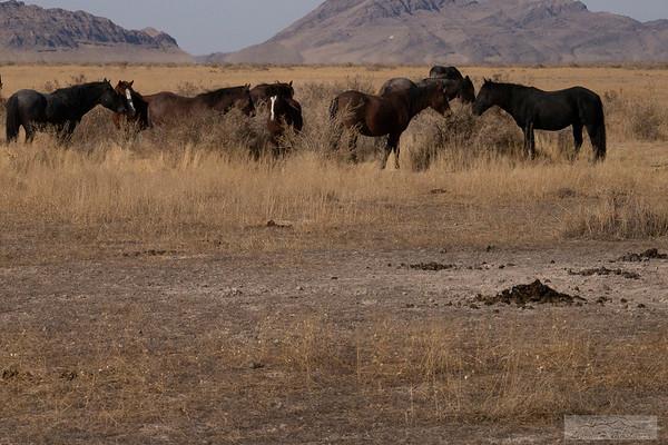 L_Blackburn_Wild Horses-31