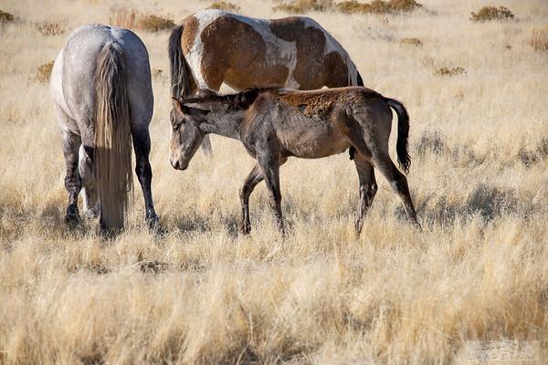 L_Blackburn_Wild Horses-5