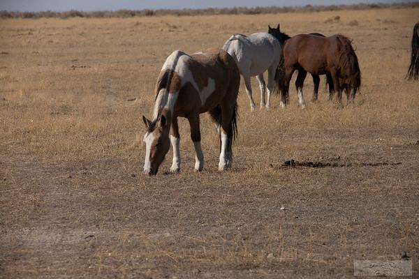 L_Blackburn_Wild Horses-27
