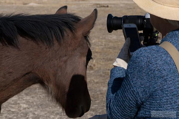 L_Blackburn_Wild Horses-37