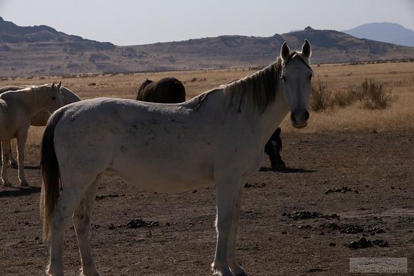 L_Blackburn_Wild Horses-34