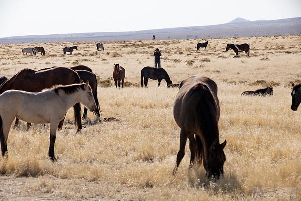 L_Blackburn_Wild Horses-12