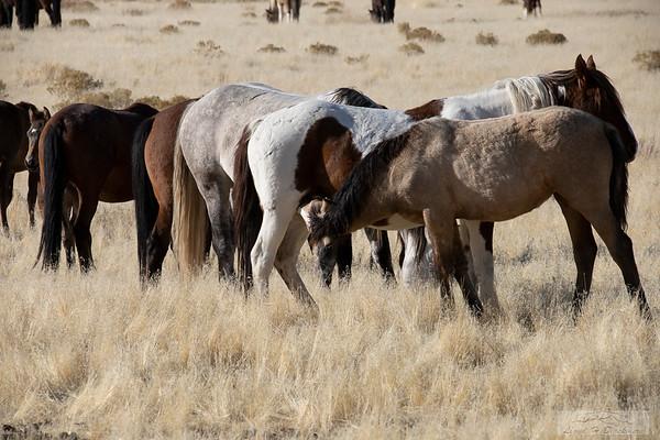 L_Blackburn_Wild Horses-16
