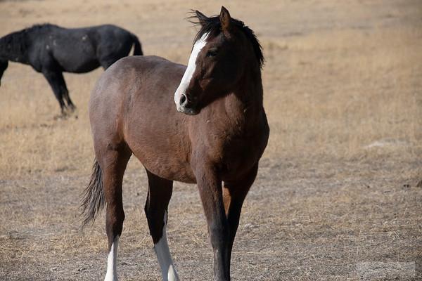 L_Blackburn_Wild Horses-29