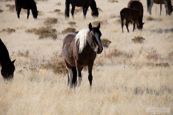 L_Blackburn_Wild Horses-13
