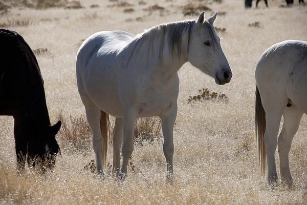L_Blackburn_Wild Horses-19