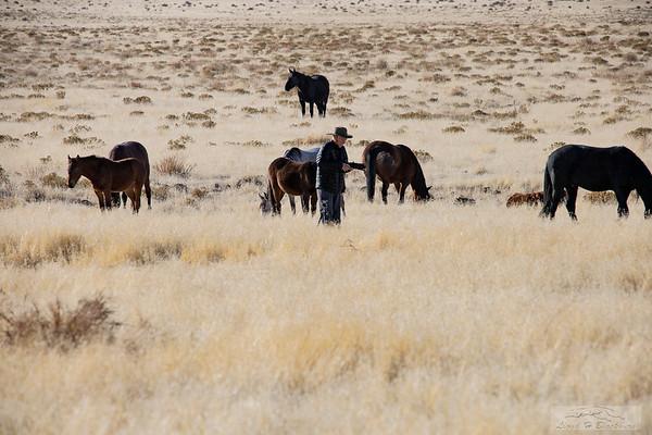 L_Blackburn_Wild Horses-3