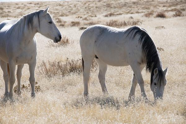 L_Blackburn_Wild Horses-20