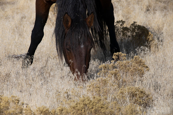 L_Blackburn_Wild Horses-22