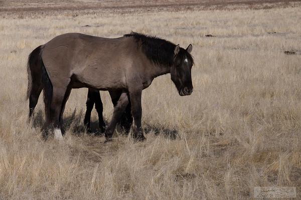 L_Blackburn_Wild Horses-25