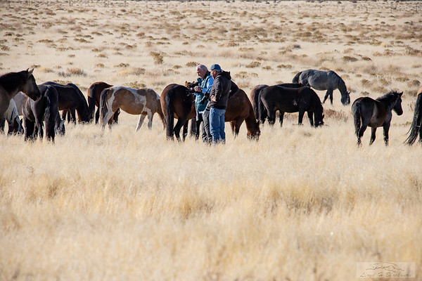 L_Blackburn_Wild Horses-2